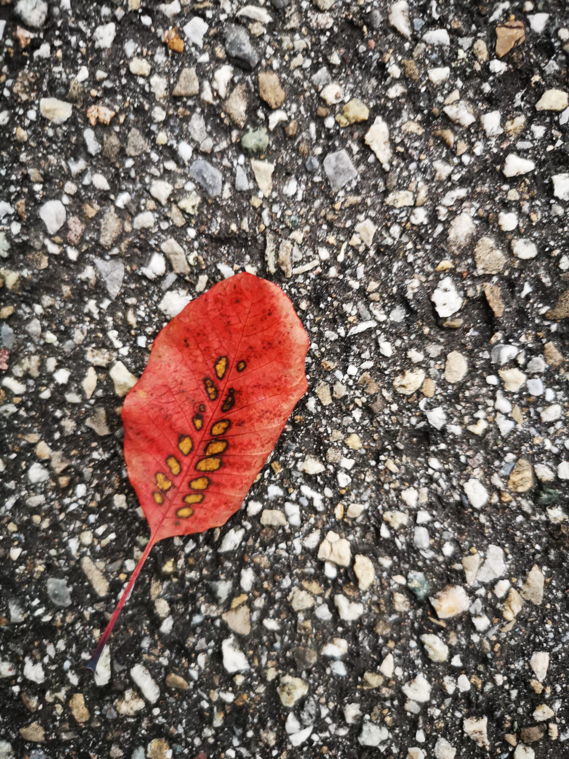 innerer Herbst